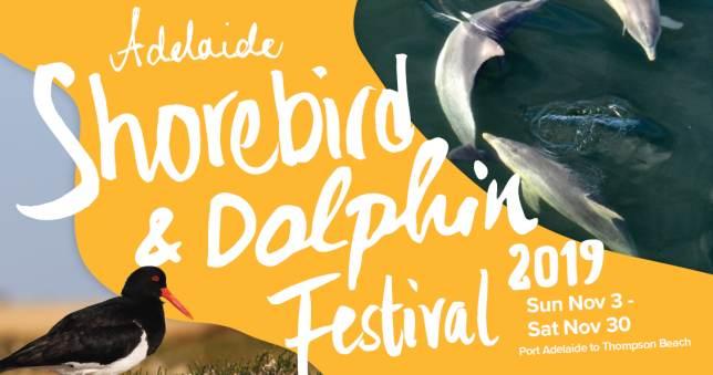 Adelaide Shorebird & Dolphin Festival