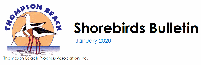 Thompson Beach Shorebirds Bulletin - January 2020